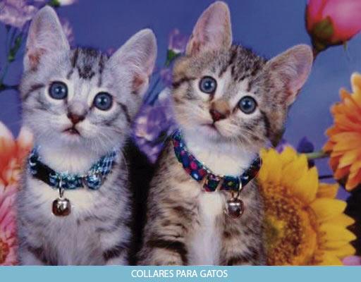 Collares para gatos